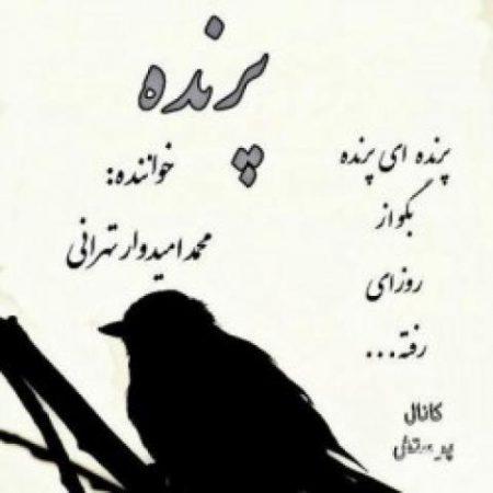 پرنده با صدای محمد امیدوار تهرانی